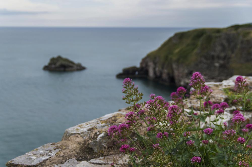 Cliff Edge Bloom