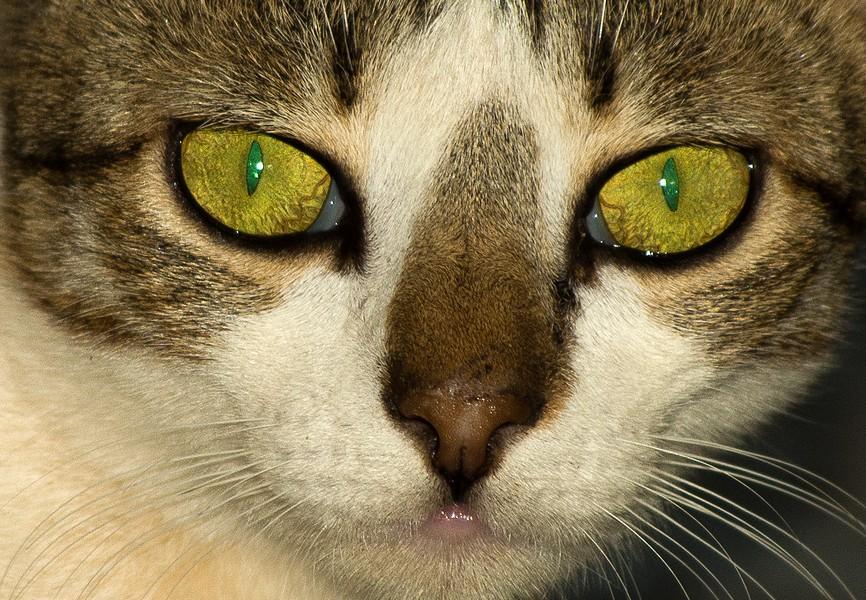 Ol' green eyes