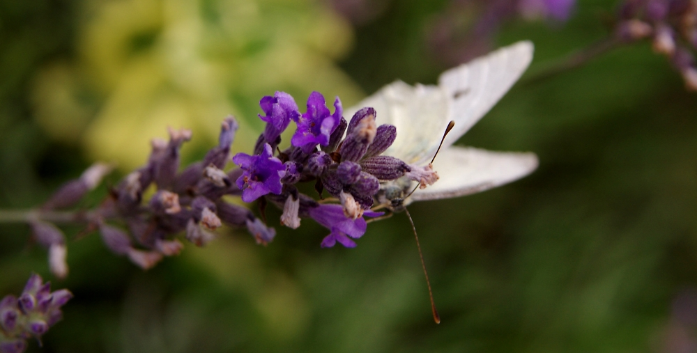 same small white and lavender