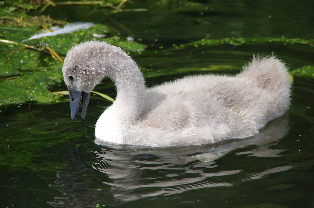 Ugly Duckling ?
