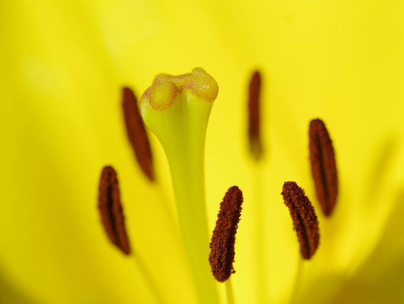 Yellow Floral macro