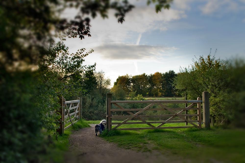 Dog & Gate