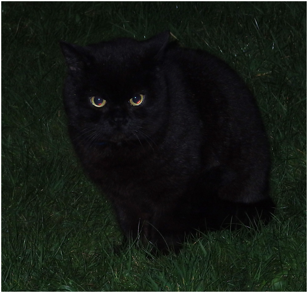 Black Cat at Night