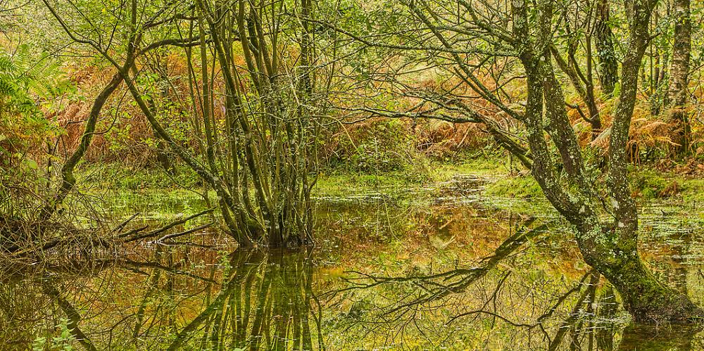 Deeper Marsh