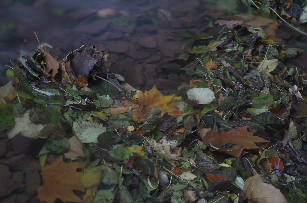 Leaves and Water