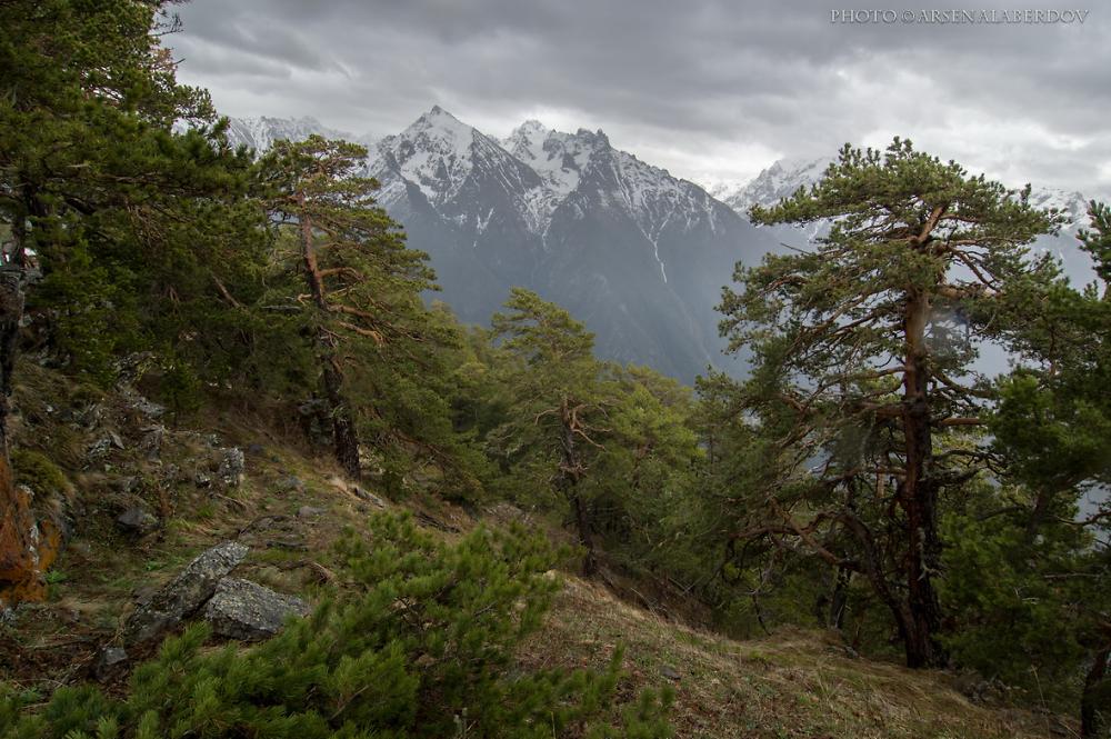 Mountain Forrest
