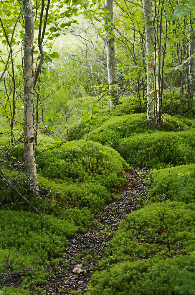 Path through a mossy forest