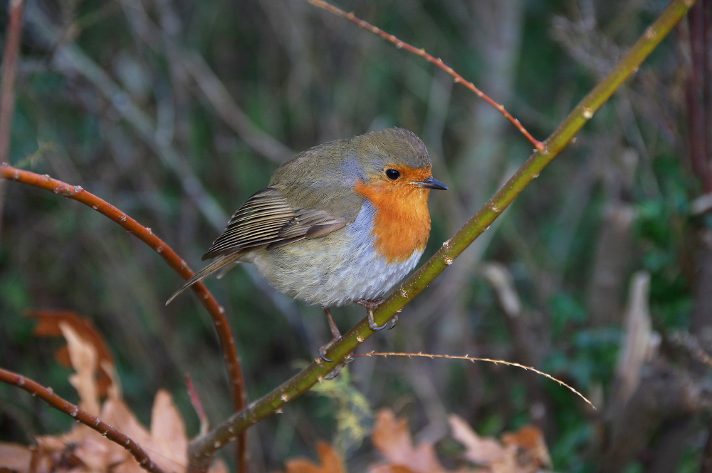 Birding in the carpark