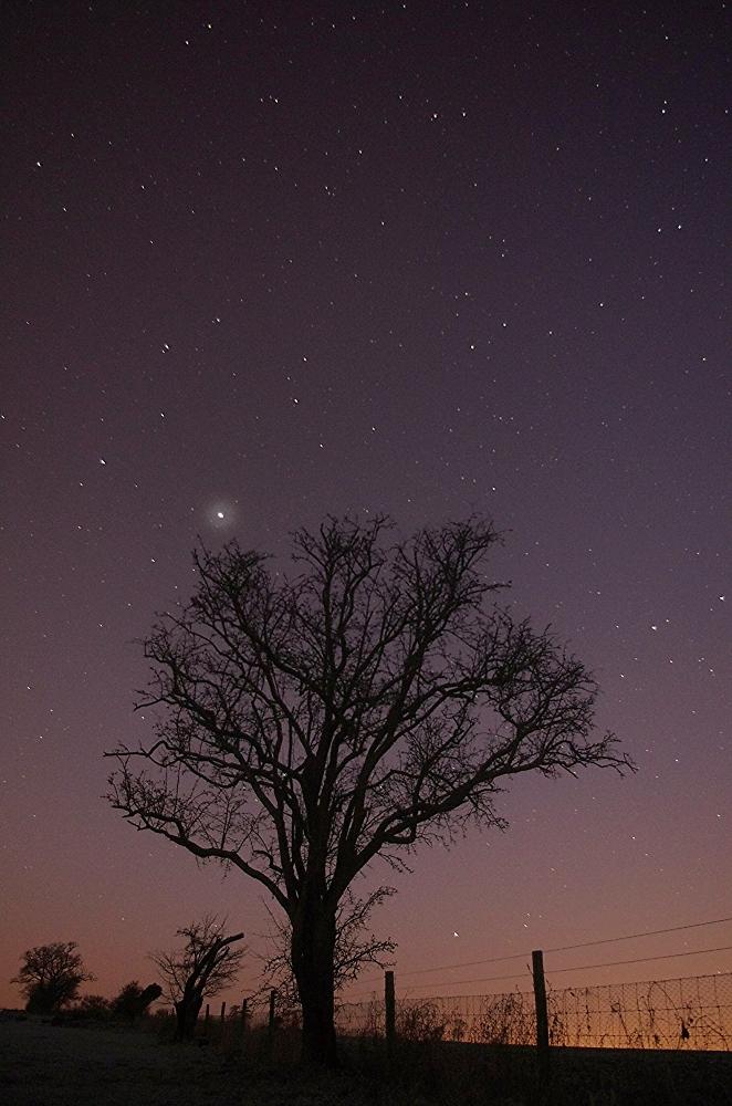 Dark tree.
