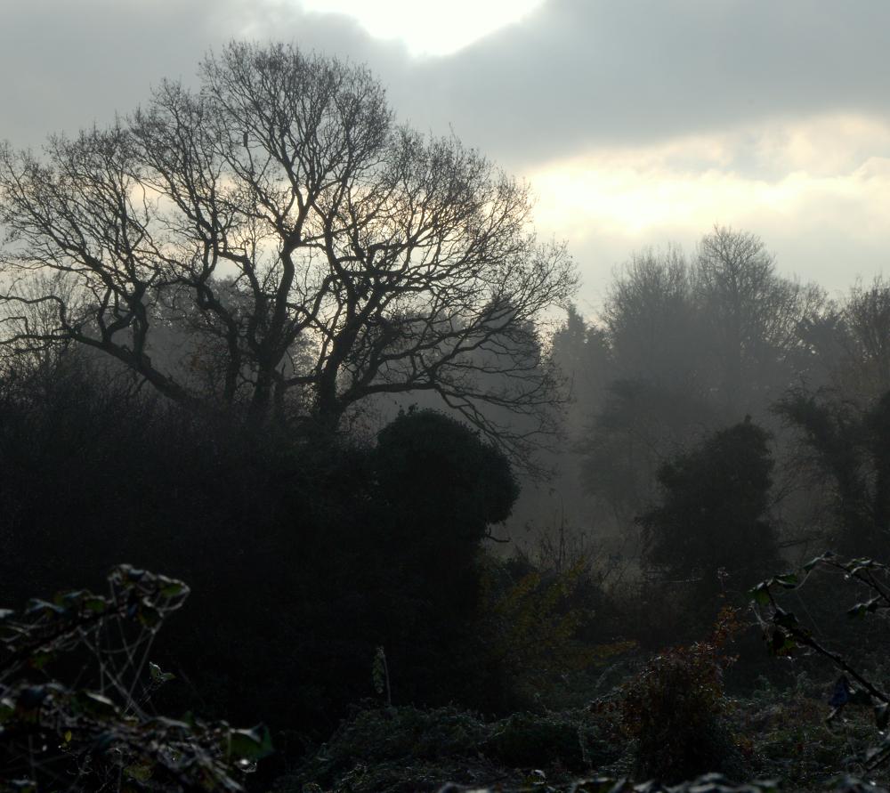 Early morning in November 2