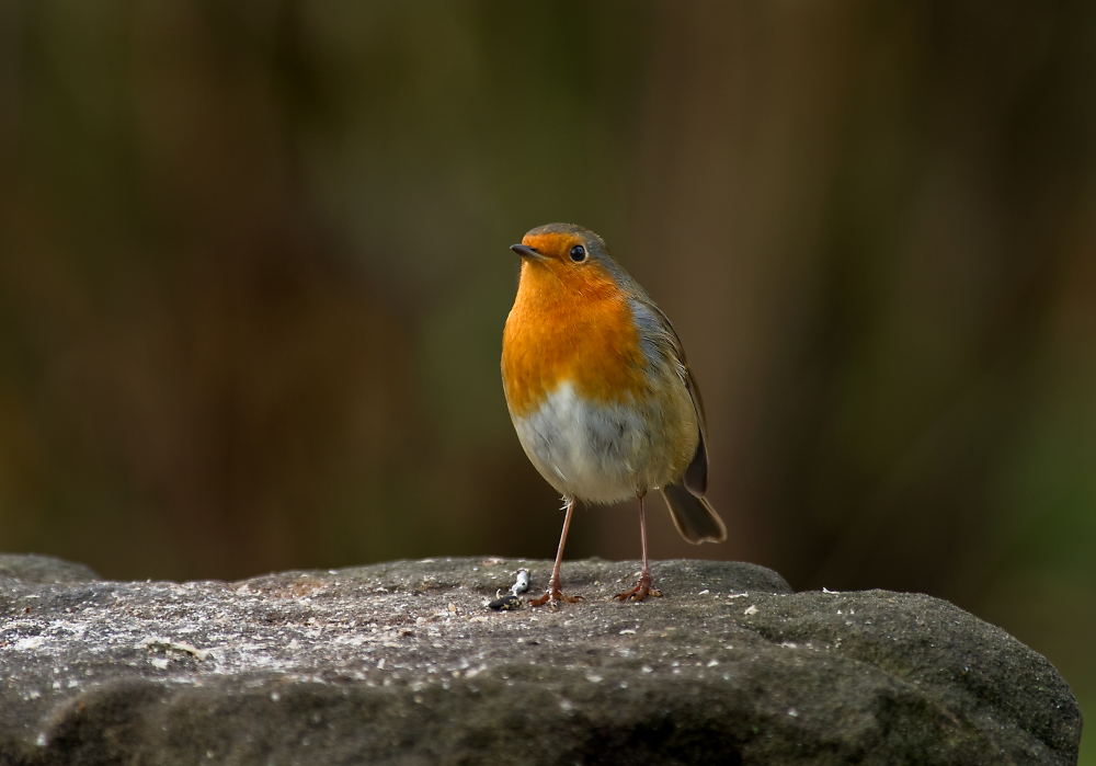 Hello, my name is 'Robin'