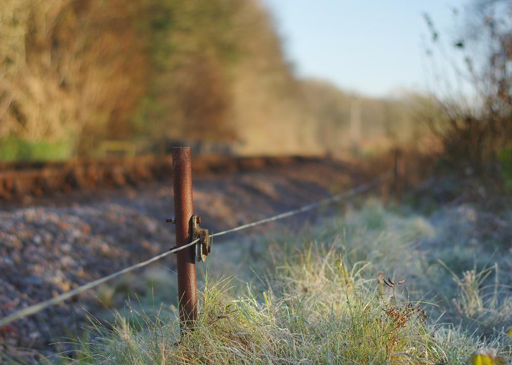 Signal Wire