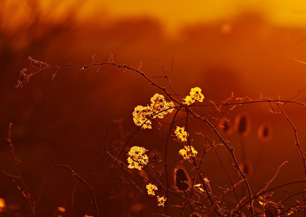 Sunset Weeds