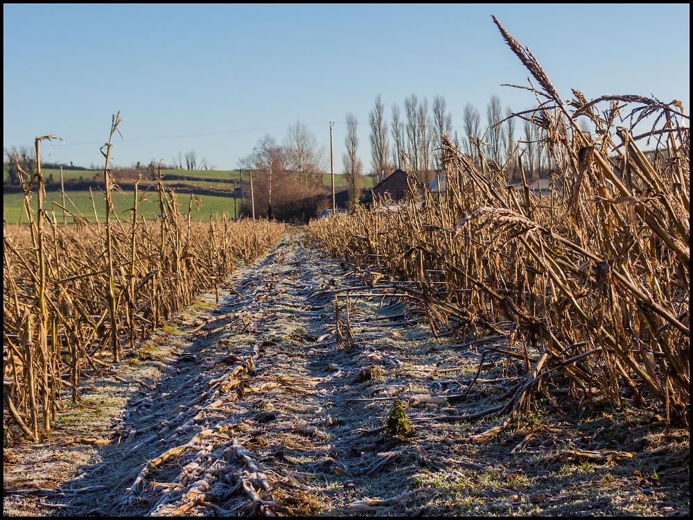 Frost on Fallow Field