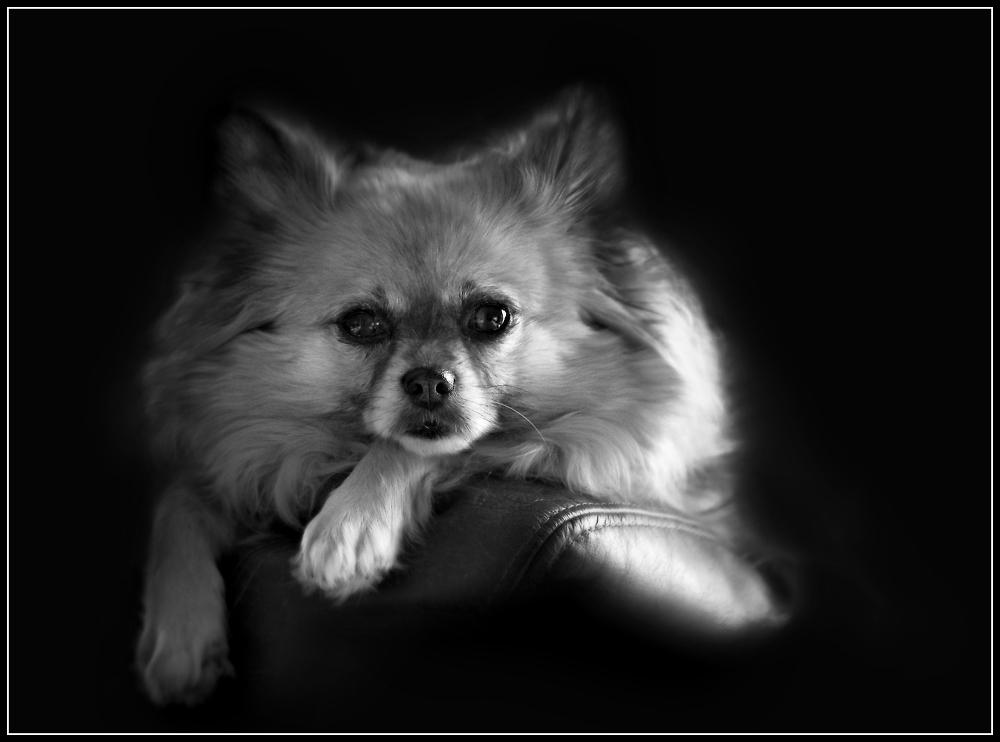 """A portrait of """"Lulu"""""""