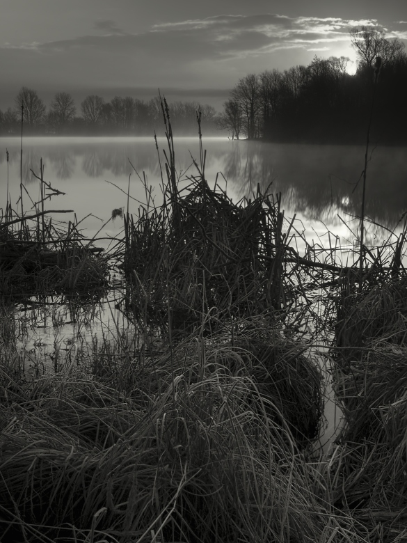Dawn in the reeds...