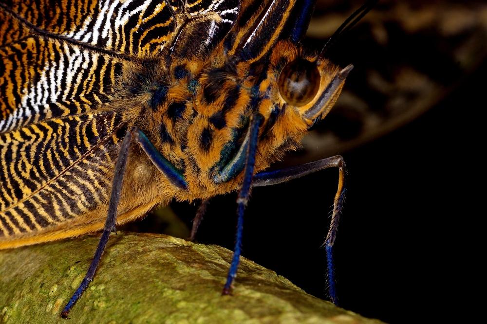 Moth Profile
