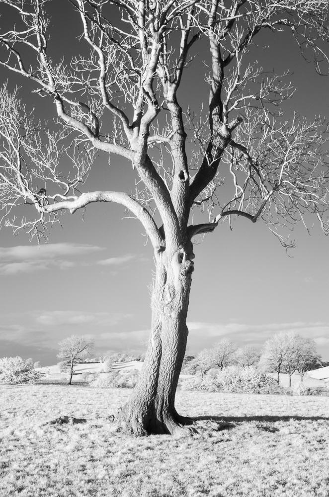 Tree, Yorkshire