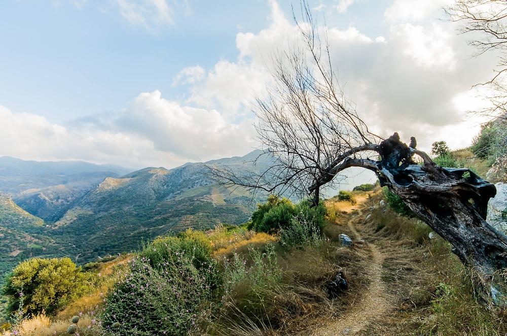 Mountain's Path
