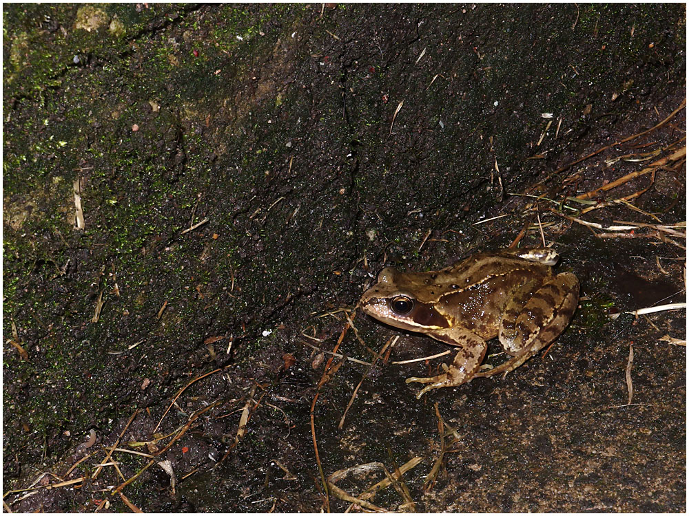 Mr Frog Passes By