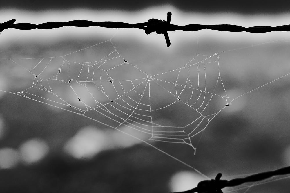 Spider's network