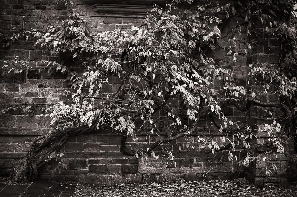 ~ wisteria ~