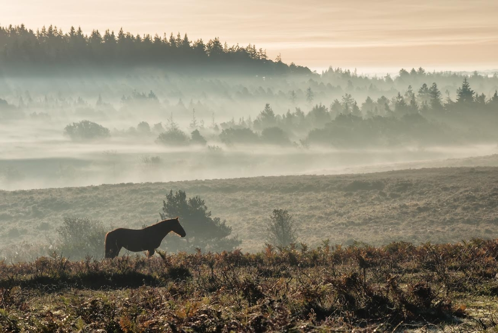 Pony on a Misty Morning