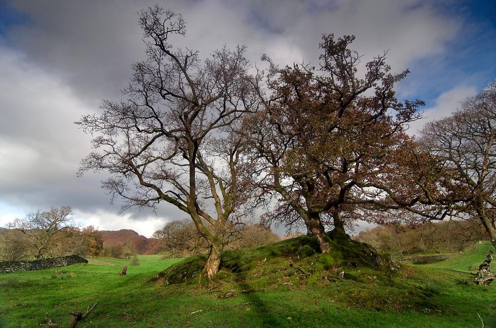Trees on a Mound