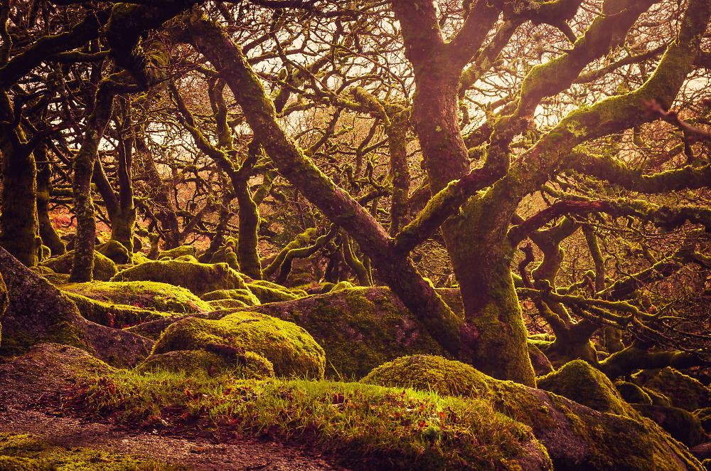 Wistman's Woods, Dartmoor