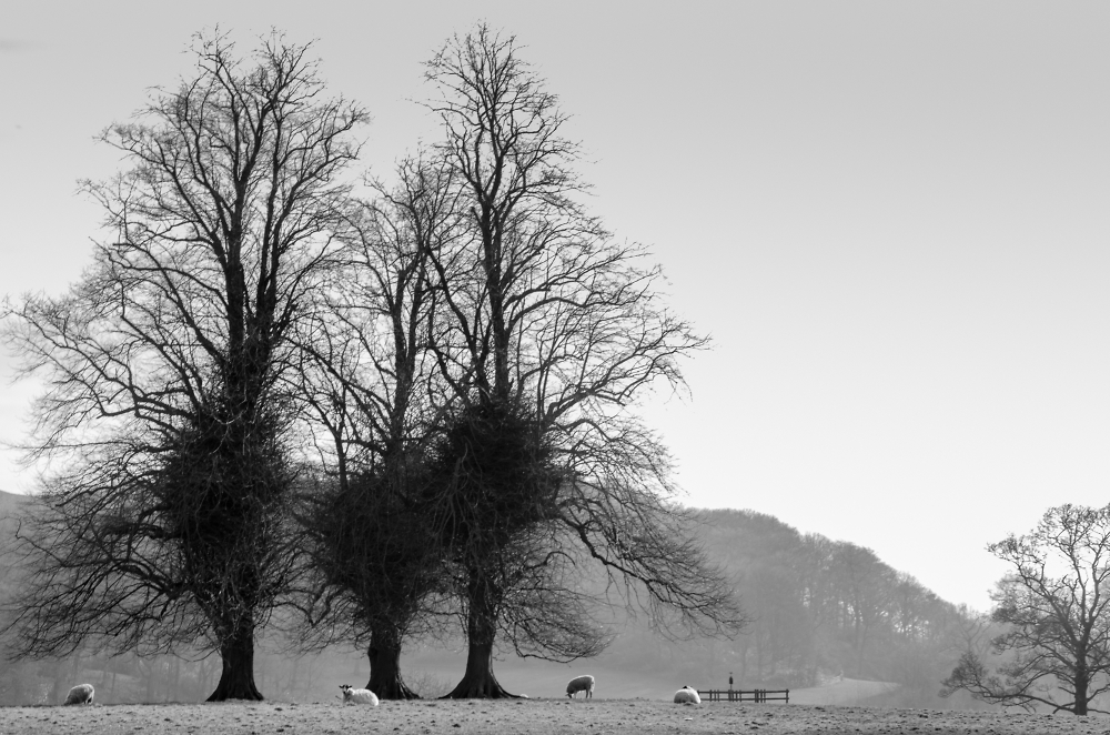 3 Ostriches posing as trees
