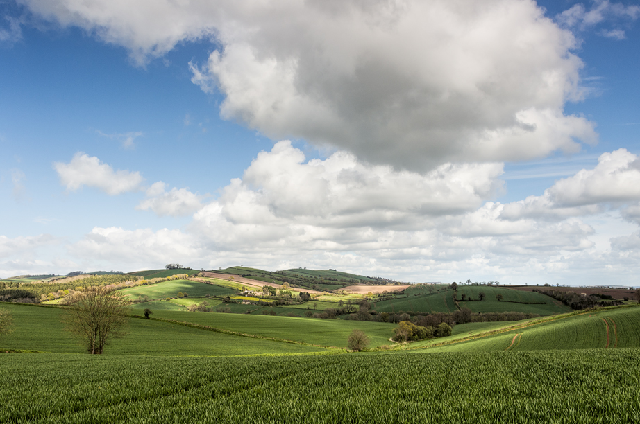 The Raddon Hills