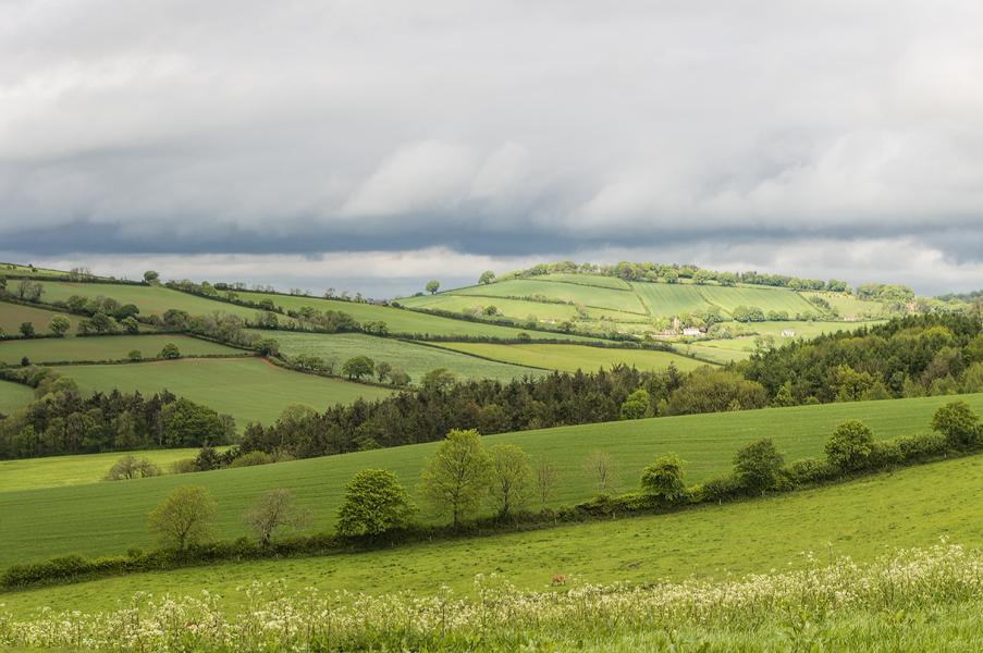 Raddon Hill