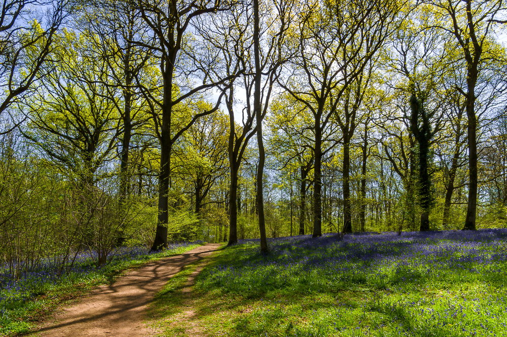 Pookchurch Wood in May