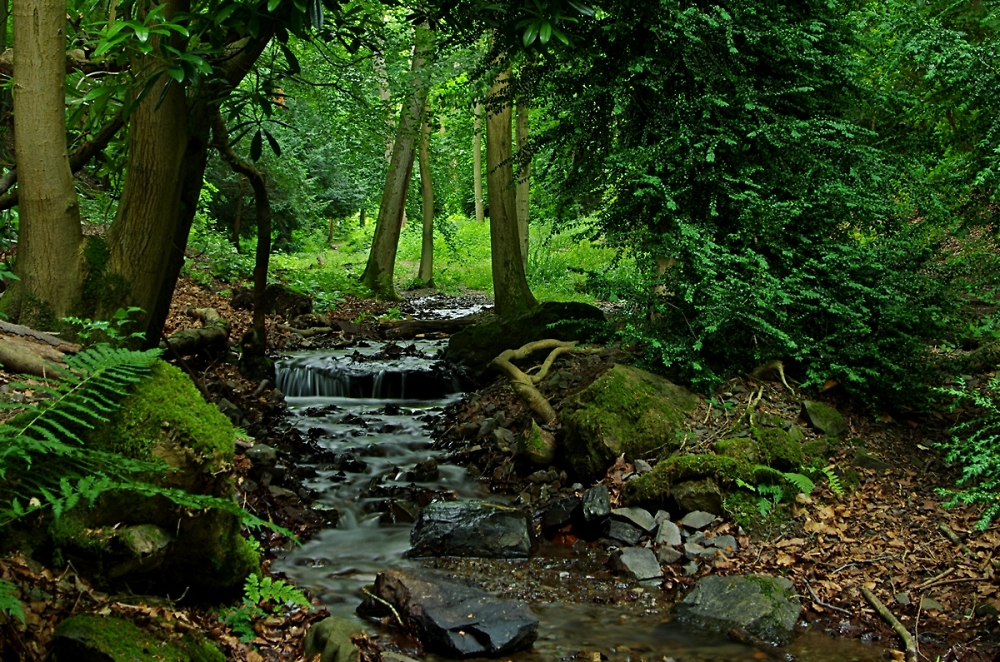 the stream in Rectory Wood