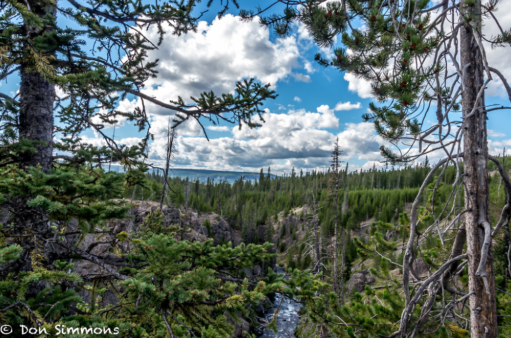 Yellowstone - A view through the trees