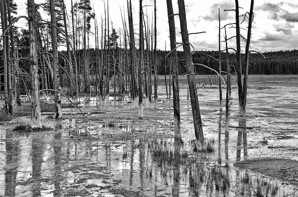 Yellowstone Bleak