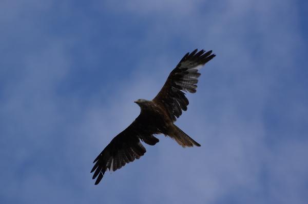 Majestic bird