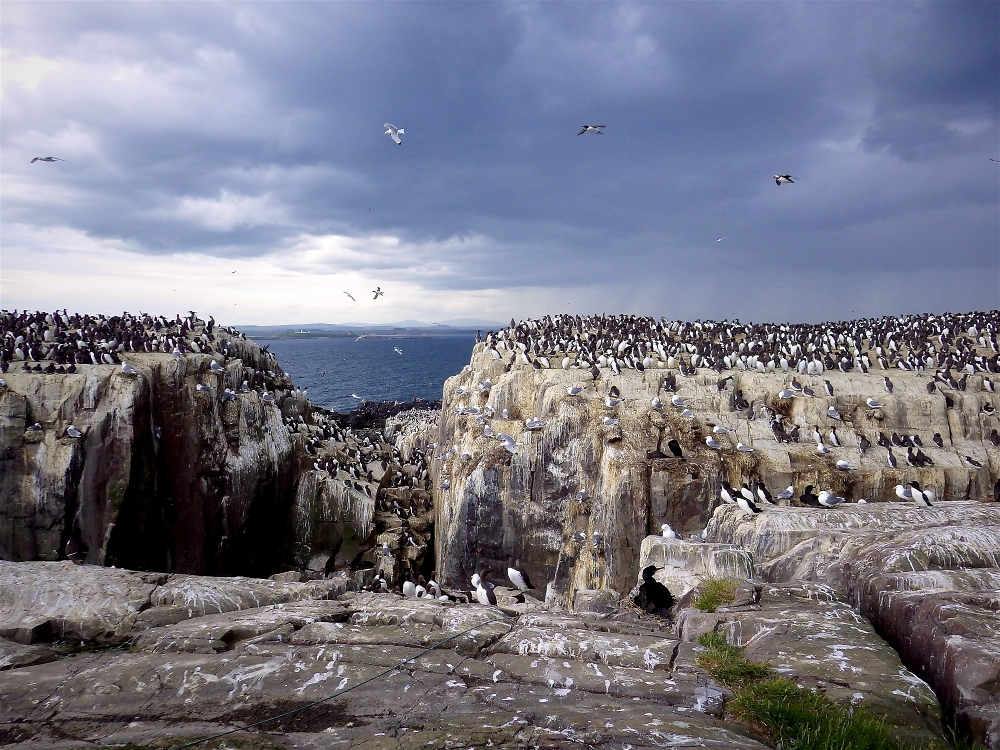 A view from the Farne Islands