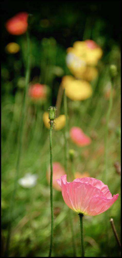 Floral Bokeh