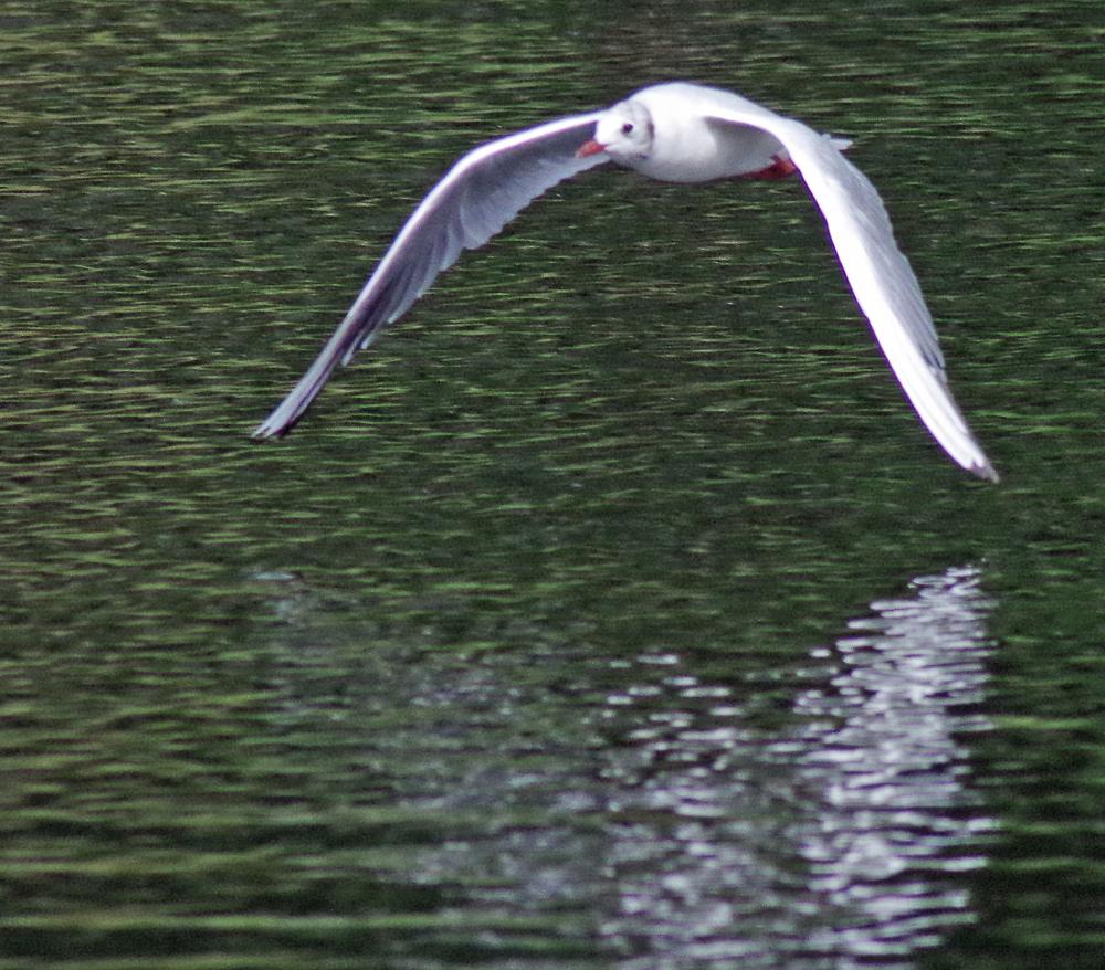 More flippin' gulls.