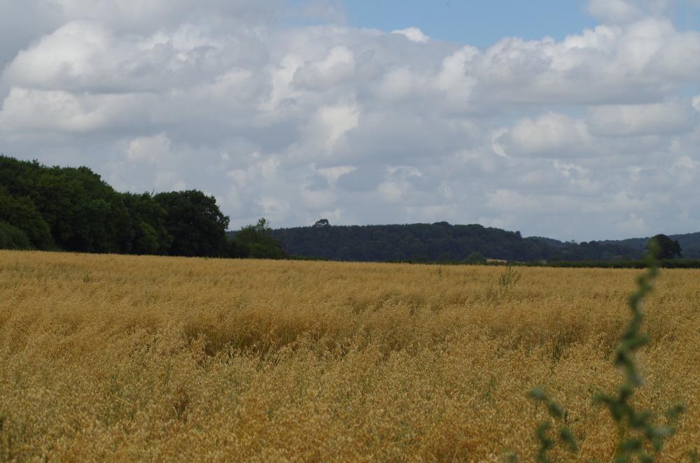 The Elysian Fields