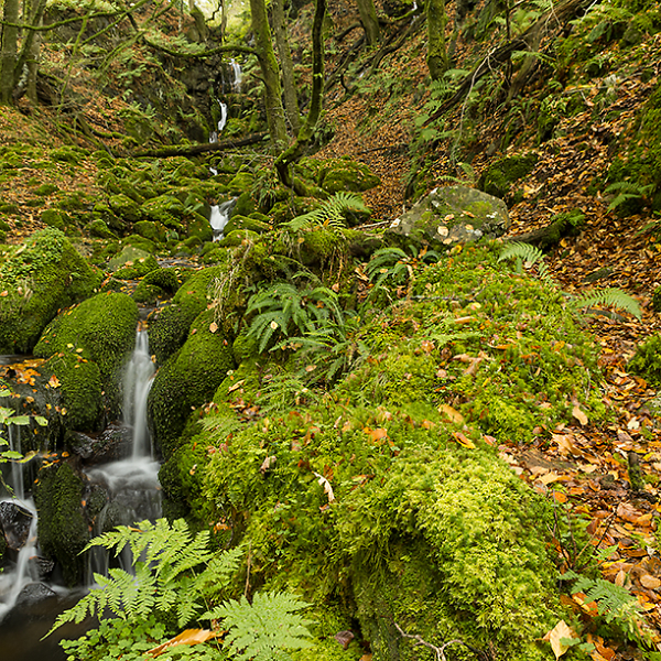 Dendle's Falls