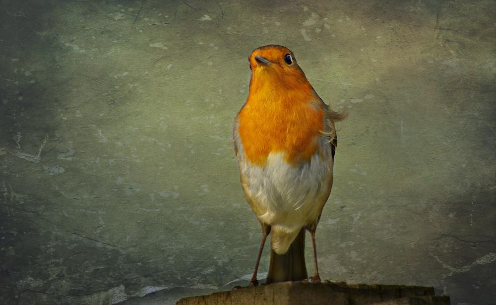 A pretty proud Robin