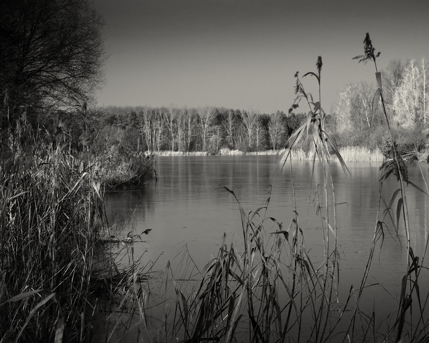 captured in the reeds...