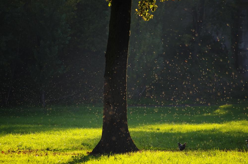 A cloud of dust on a meadow