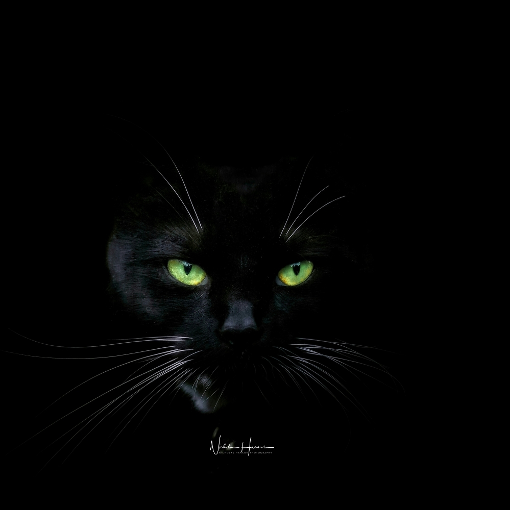 Looking for a black cat in a dark room 😊