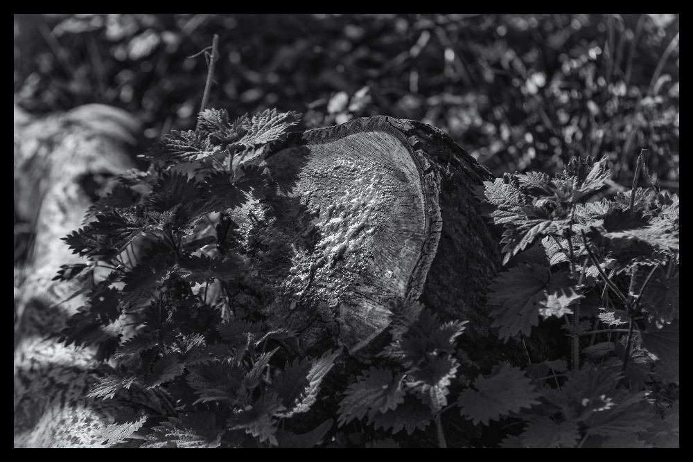 Nettle and Stump