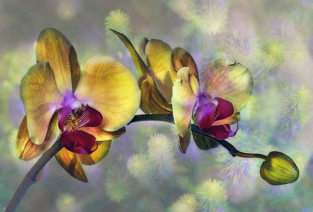 Orchid with Texture