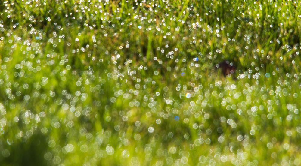 Bejewelled Lawn