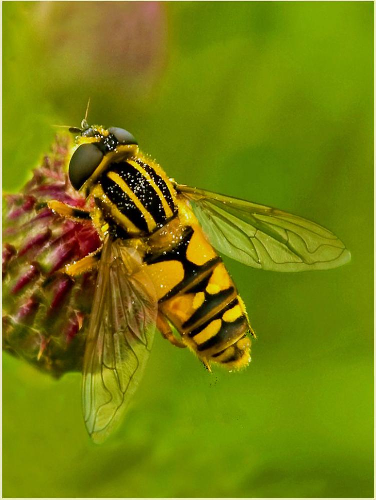 Pollen hunter